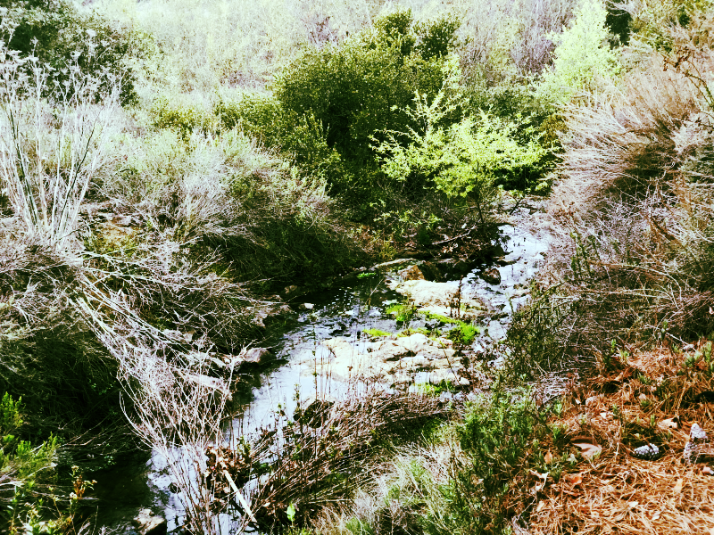 Discovery Creek